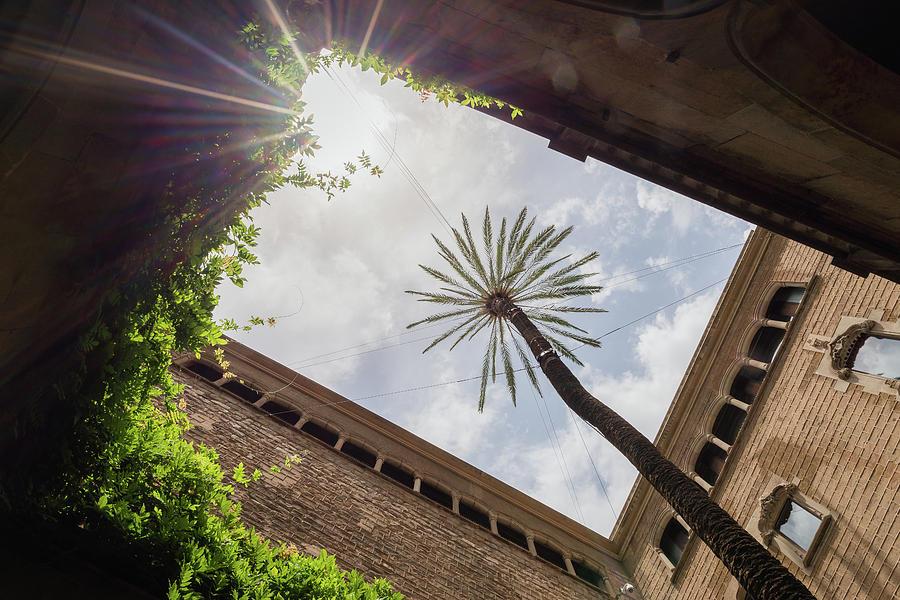 Architecture Photograph - Barcelona Courtyard With Palm Tree by Blaz Gvajc
