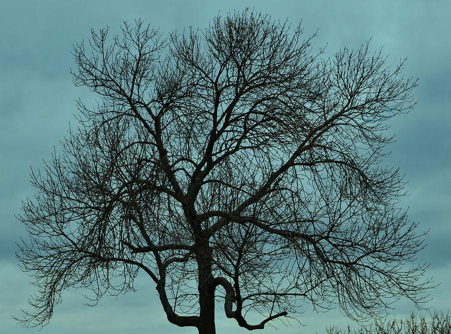 Bare Branches And Storm Clouds Photograph by Bill Driscoll