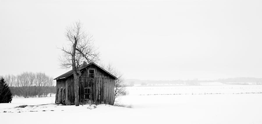 Winter Photograph - Bare Tree And Barn by Levin Rodriguez