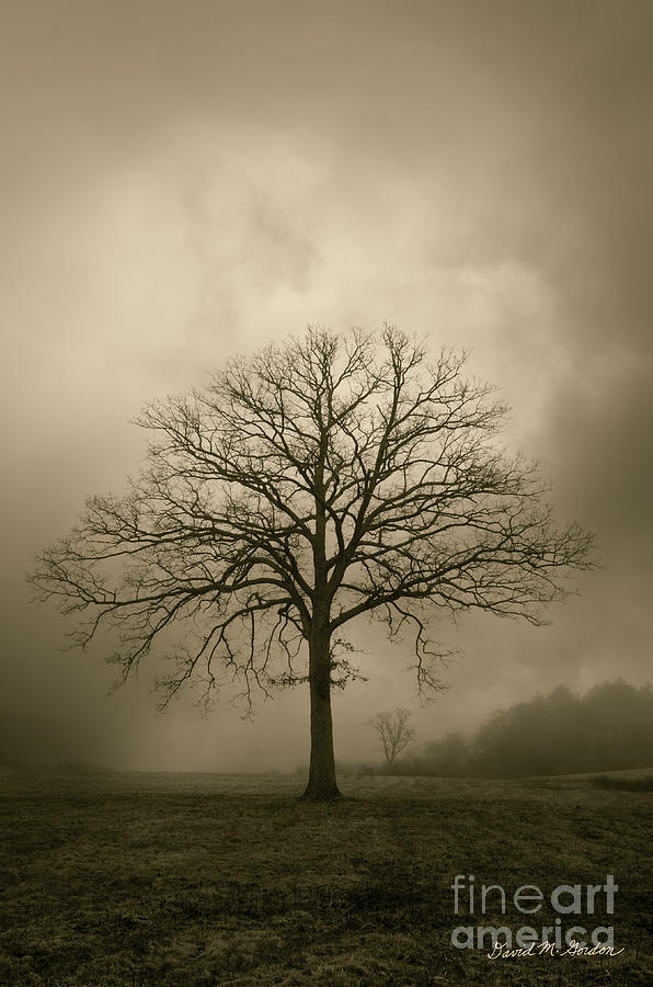 Tree Photograph - Bare Tree And Clouds  by Dave Gordon