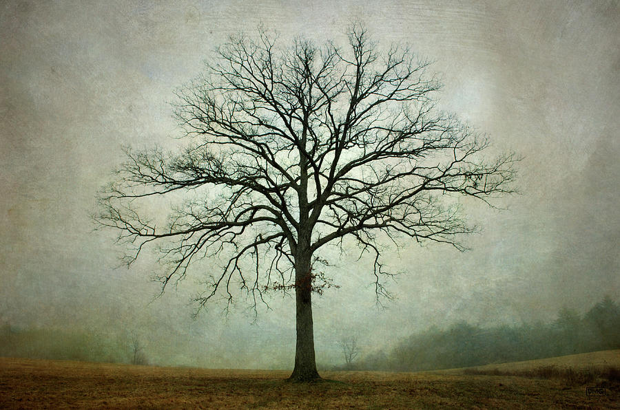 Bare Tree and Fog by Dave Gordon