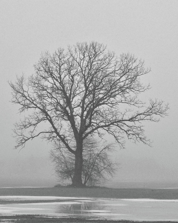 Bare Tree in Fog by Nancy Landry