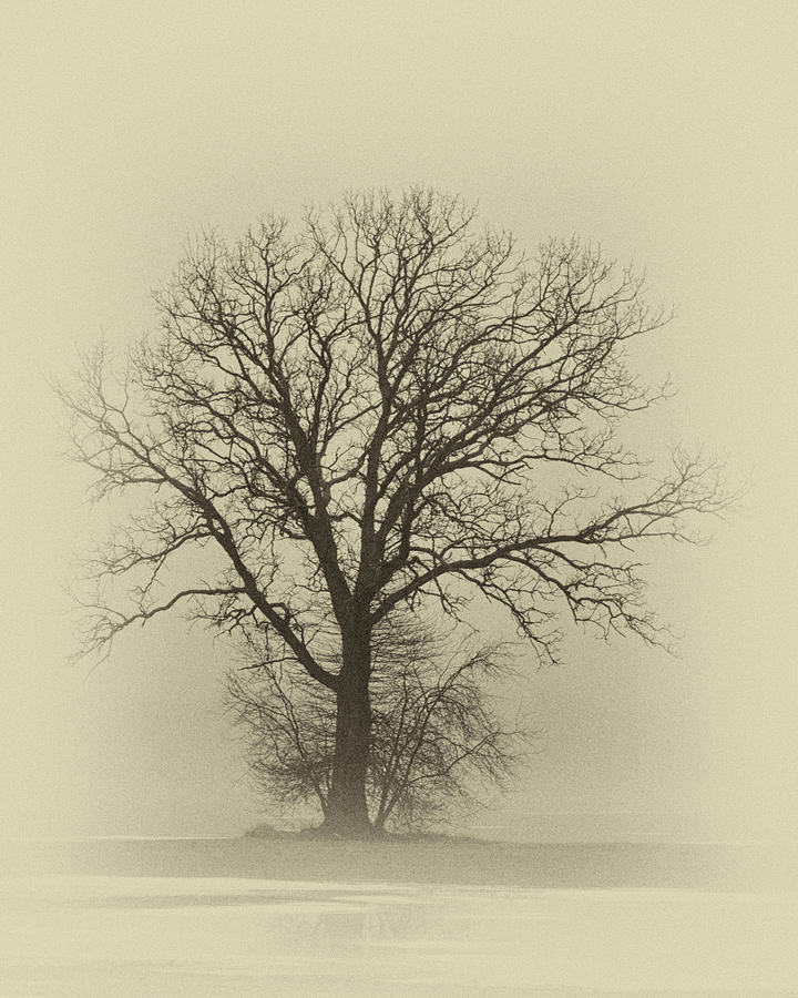 Bare Tree in Fog- Nik filter by Nancy Landry