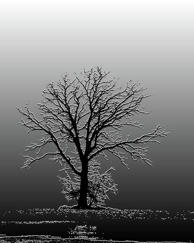 Tree Photograph - Bare Tree In Fog- Pe Filter by Nancy Landry