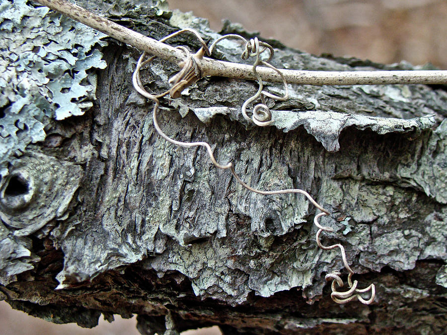 Tree Photograph - Bark - Lichen - Cat Brier Tendrils by Mother Nature