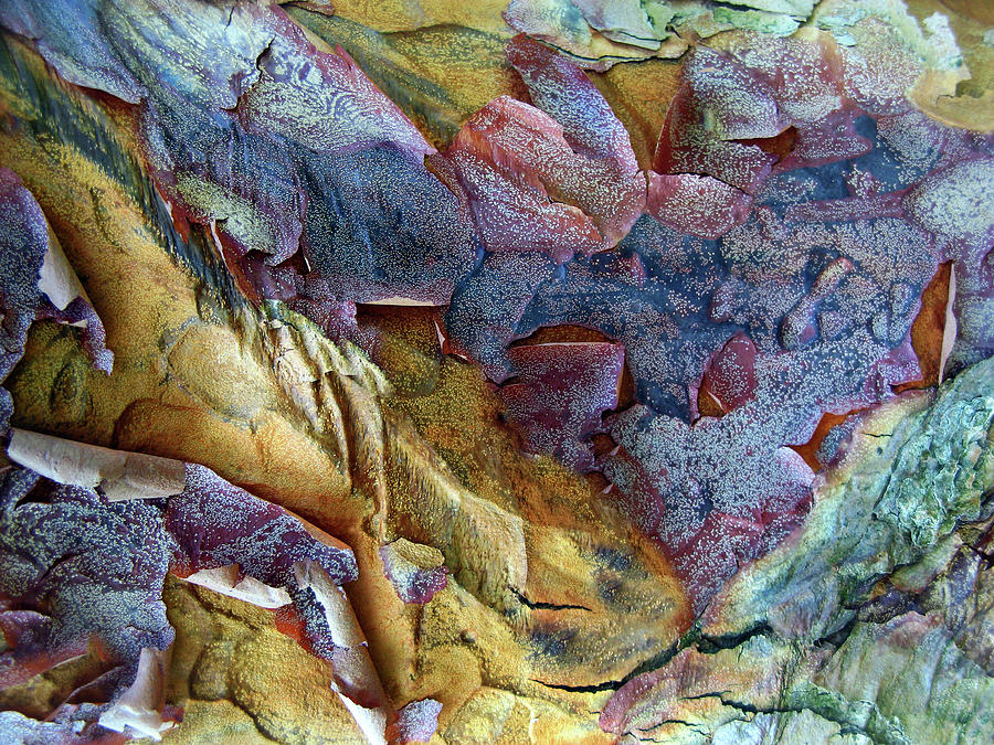 Bark Photograph - Bark Abstract by Jessica Jenney