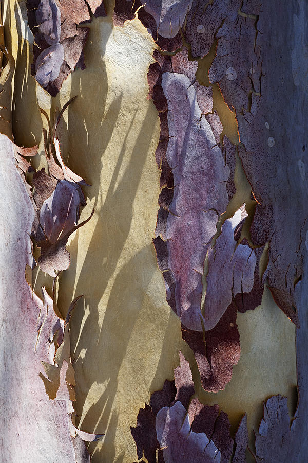 Tree Photograph - Bark Texture by Kelley King