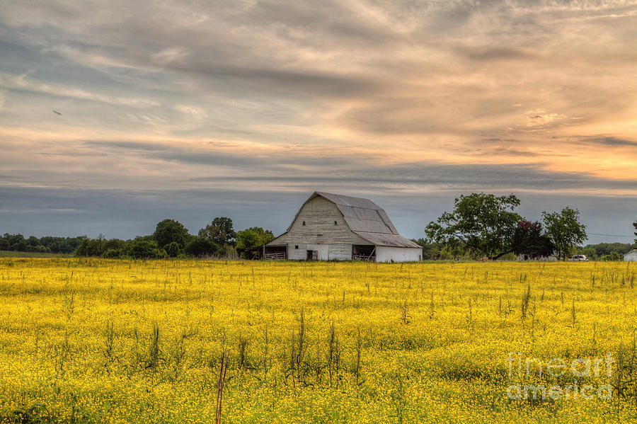 2015 Photograph - Barm In A Yellow Field by Larry Braun