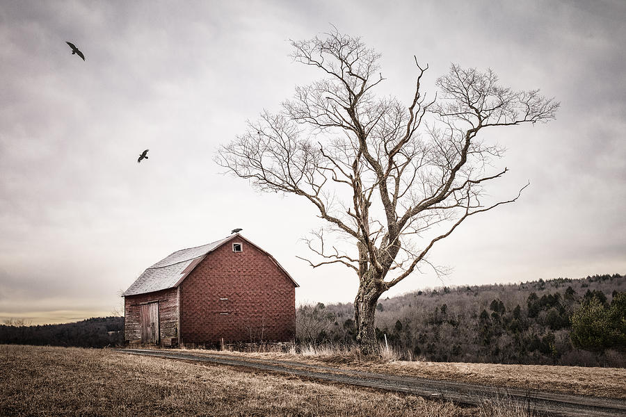 Barns Photograph - barn and tree - New York State by Gary Heller