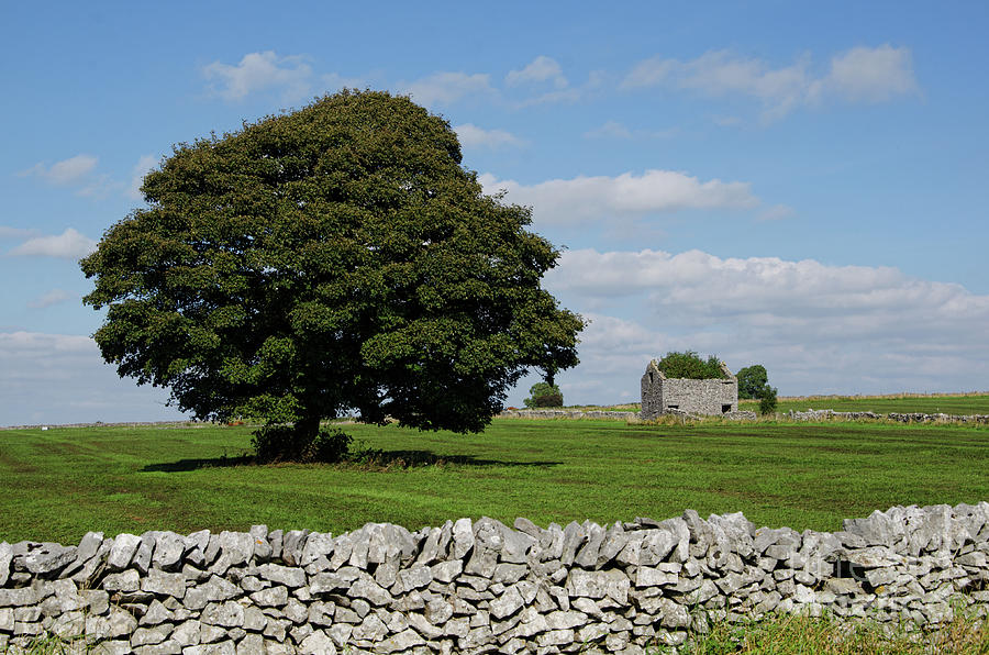 Peak District Photograph - Barn And Tree by Steev Stamford
