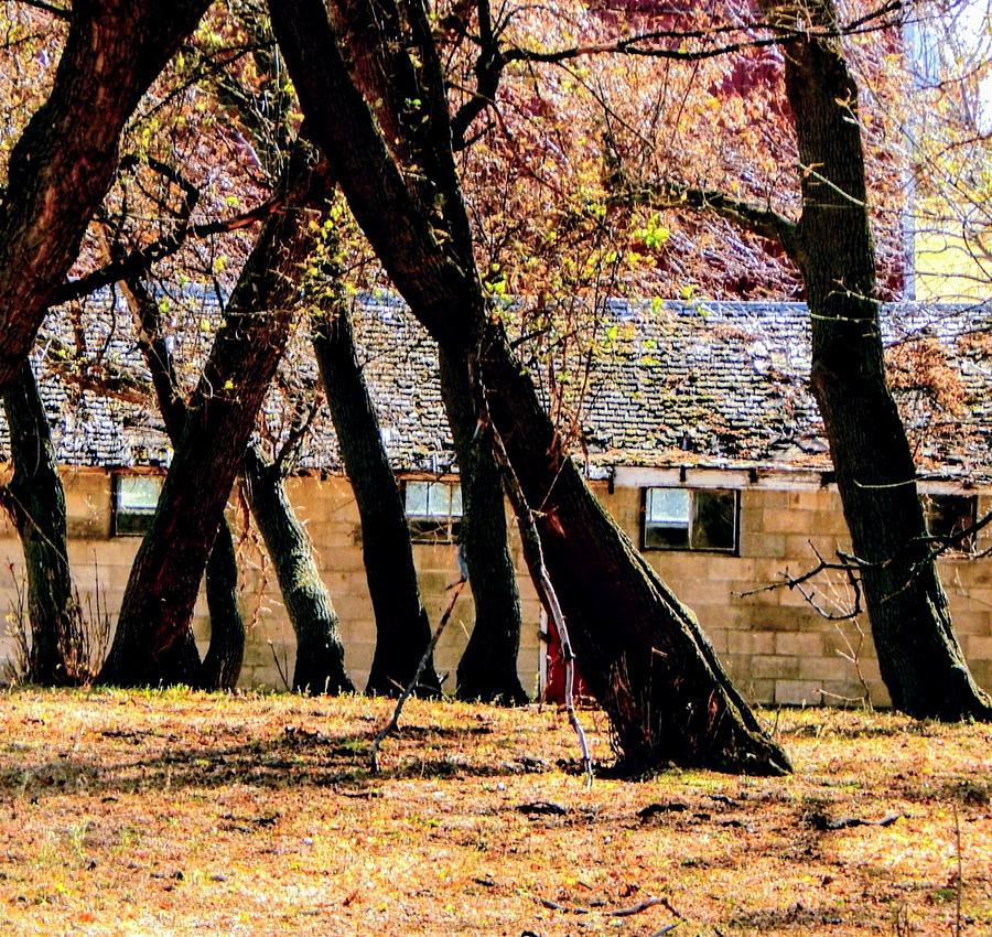 Barn Photograph - Barn Behind Trees by Curtis Tilleraas