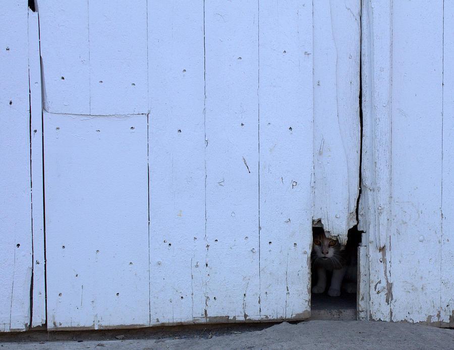 Cat Photograph - Barn Cat Hello by Liz Allyn