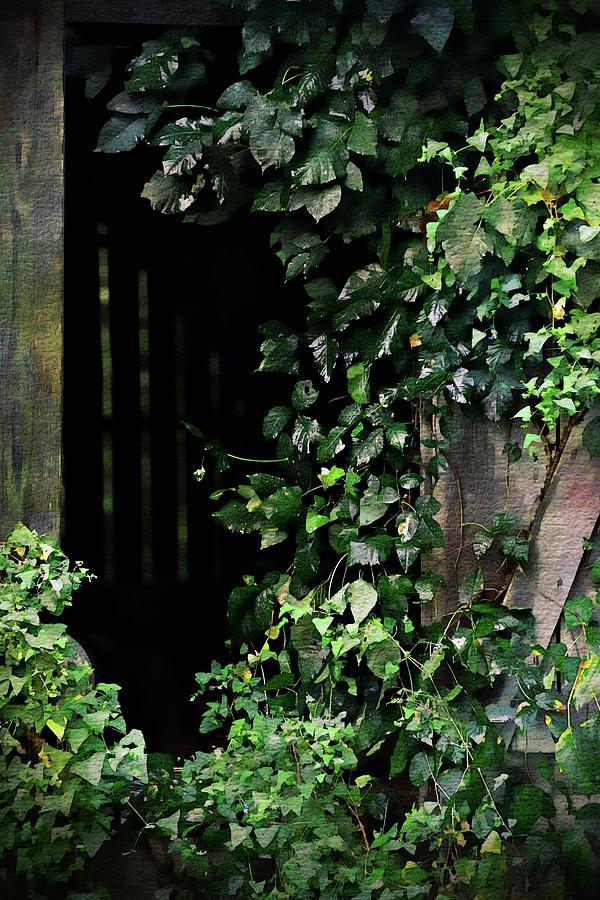 Barn Door Vines Ink Photograph by Scott Fracasso