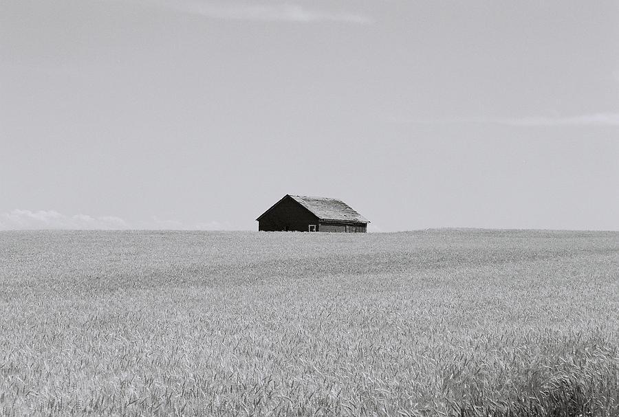 Barn In A Wheat Field Photograph by John Danforth