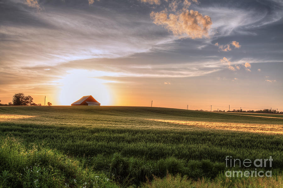 2015 Photograph - Barn In A Wheat Field  by Larry Braun