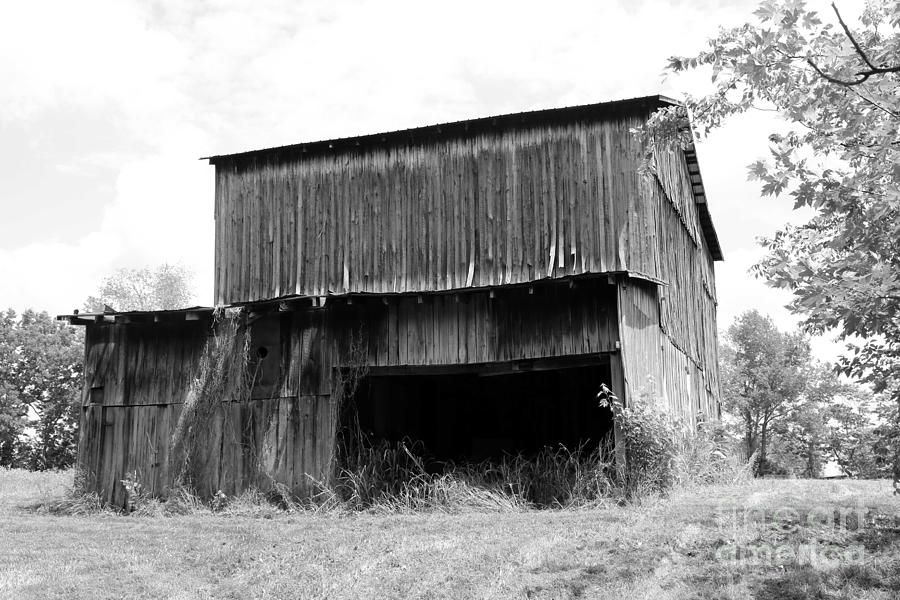 B&w Photograph - Barn In Kentucky No 79 by Dwight Cook