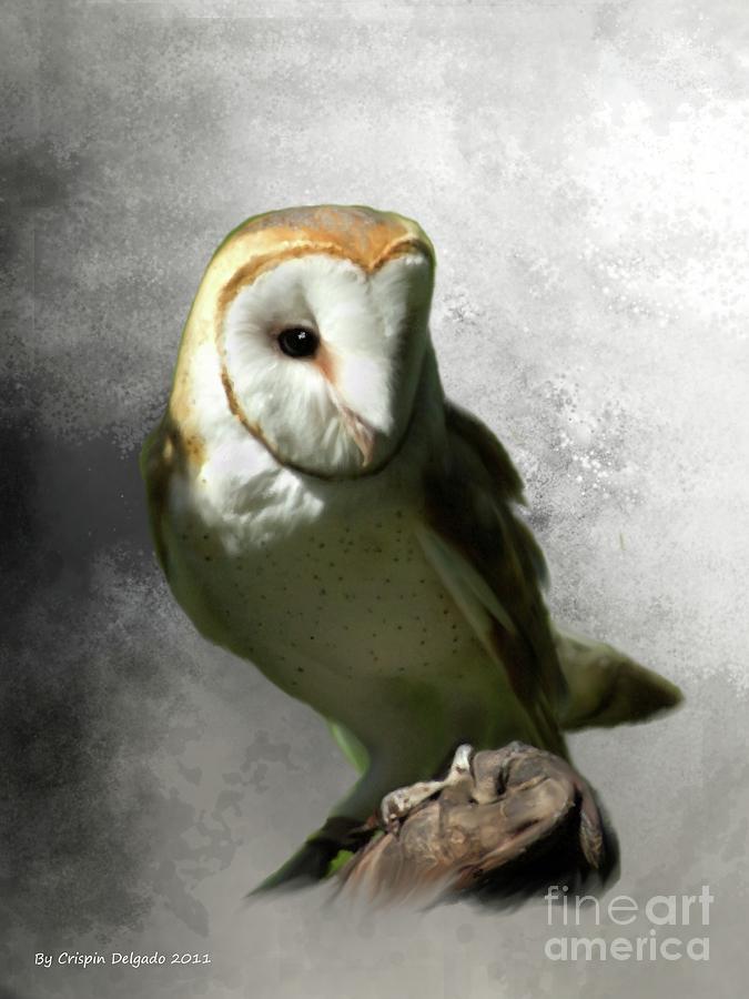 Owls Digital Art - Barn Owl by Crispin  Delgado
