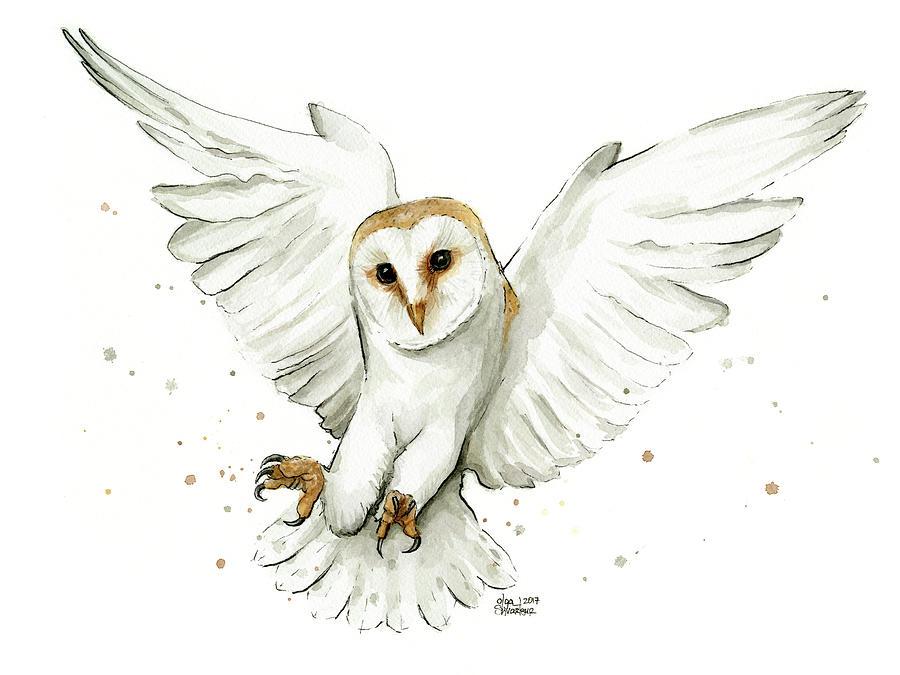 Barn Owl Flying Watercolor Painting By Olga Shvartsur