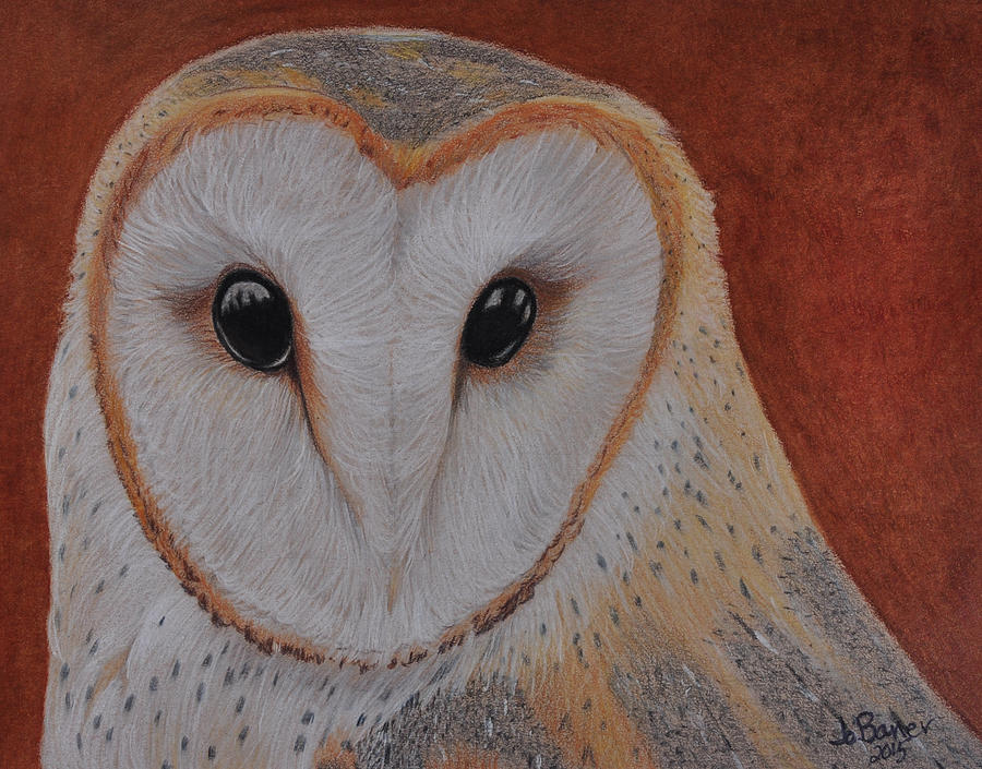 Barn Owl by Jo Baner