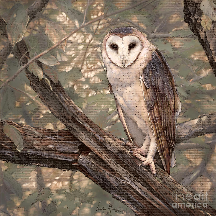 Barn Owl Drawing - Barn Owl by Laurie Musser