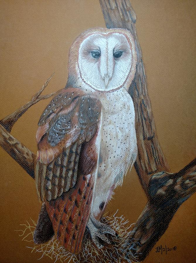 Barn Owl Pastel - Barn Owl On Tree by Joan Mansson