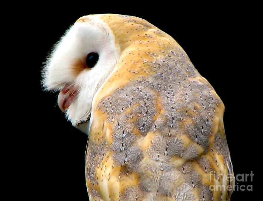Birds Photograph - Barn Owl by Rose Santuci-Sofranko