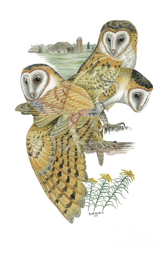 Owl Painting - Barn Owl by Scott Rashid