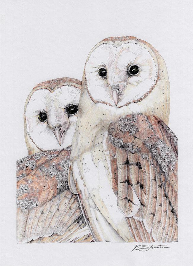 Owl Drawing - Barn Owls by Kathy Shuster