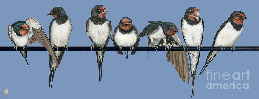 Barn Swallow-Hirundo rustica-Rauchschwalbe-Boerenzwaluw -Ladusvala-Hirondelle rustique-Golondrina by Urft Valley Art