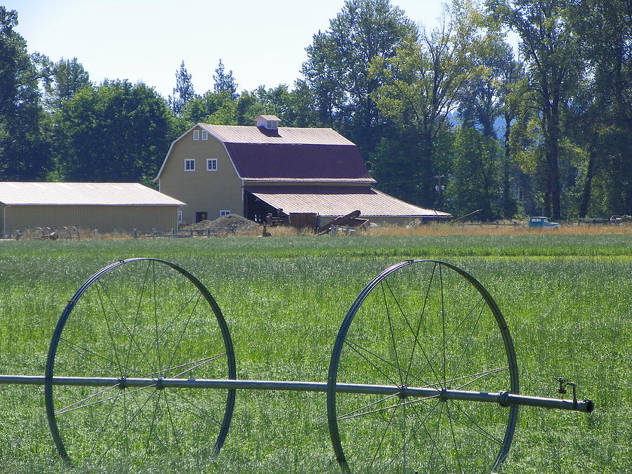 Digital Photography Photograph - Barns by Laurie Kidd