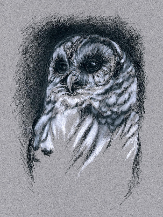 Bird Drawing - Barred Owl by MM Anderson