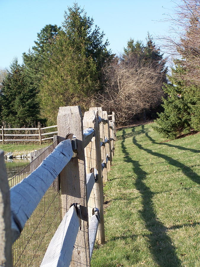 Fence Photograph - Barriers by Vijay Sharon Govender