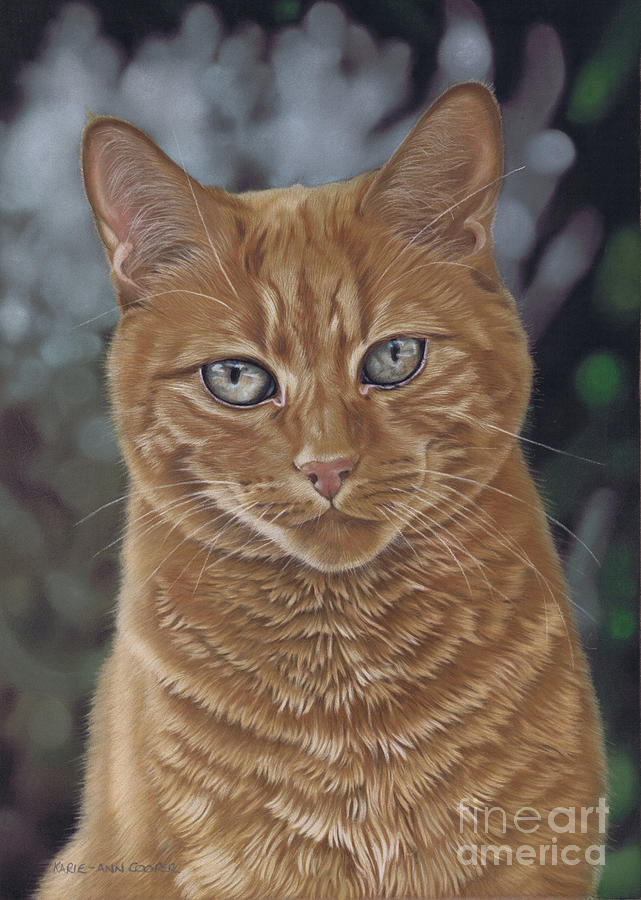 Barry The Cat Pastel