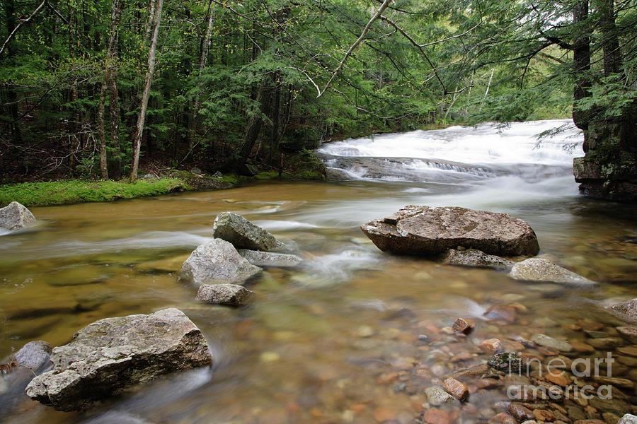 New England Photograph - Bartlett Experimental Forest - Bartlett New Hampshire Usa by Erin Paul Donovan