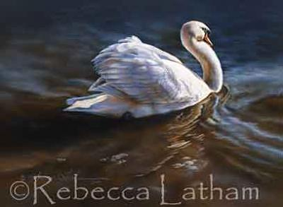 Swan Painting - Bashful - Mute Swan by Rebecca Latham