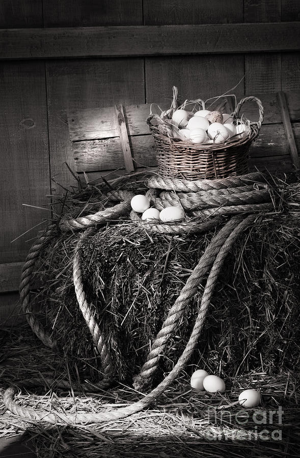 Background Photograph - Basket Of Eggs On A Bale Of Hay by Sandra Cunningham