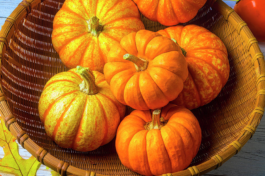 Small Photograph - Basket Of Pumpkins by Garry Gay