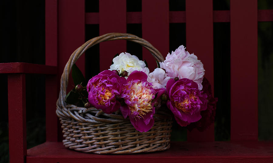 Peonies Photograph - Basket On The Bench by Rebecca Cozart