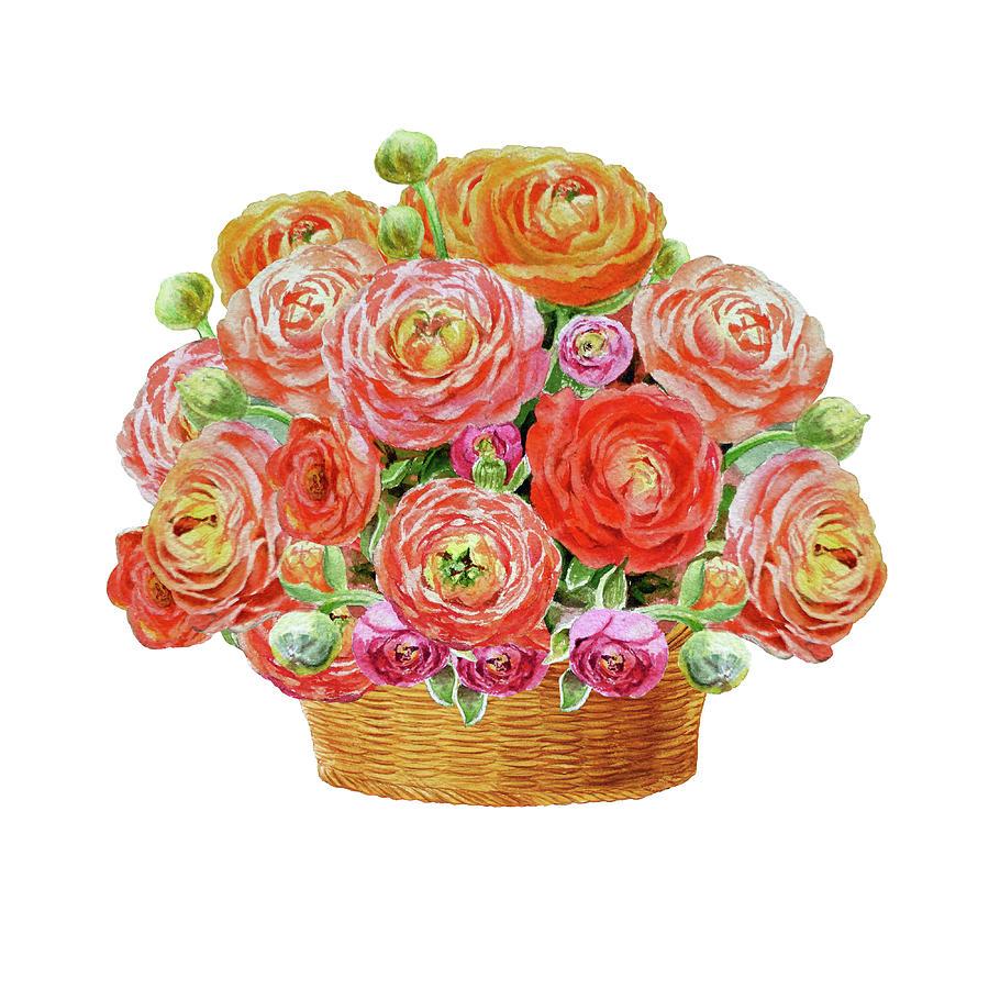 Basket Painting - Basket With Ranunculus Flowers Watercolor by Irina Sztukowski