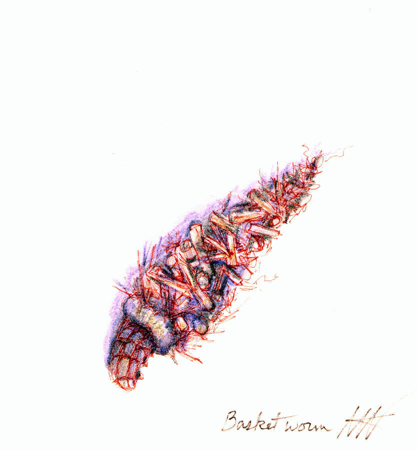 Basketworm by Ashley Kujan