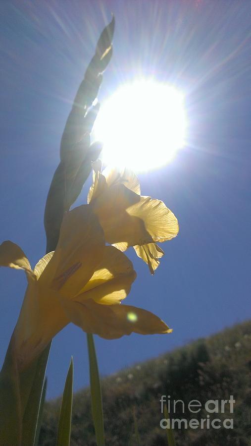 Gladiolus Photograph - Basking by LKB Art and Photography
