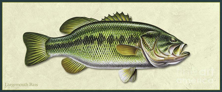 Bass ID by Jon Q Wright