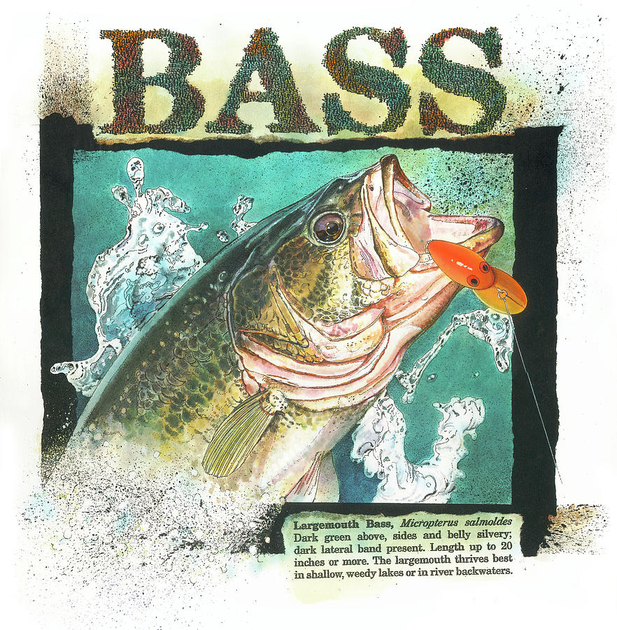 BASS by John Dyess