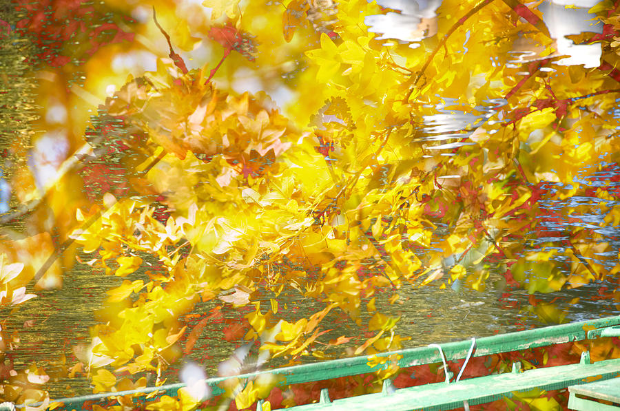 Fall Leaves Photograph - Bassano by Mary Mansey