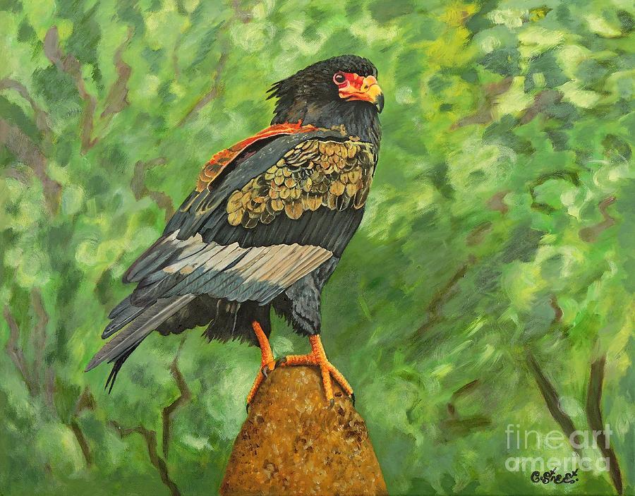 Eagle Painting - Bataleur Eagle by Caroline Street