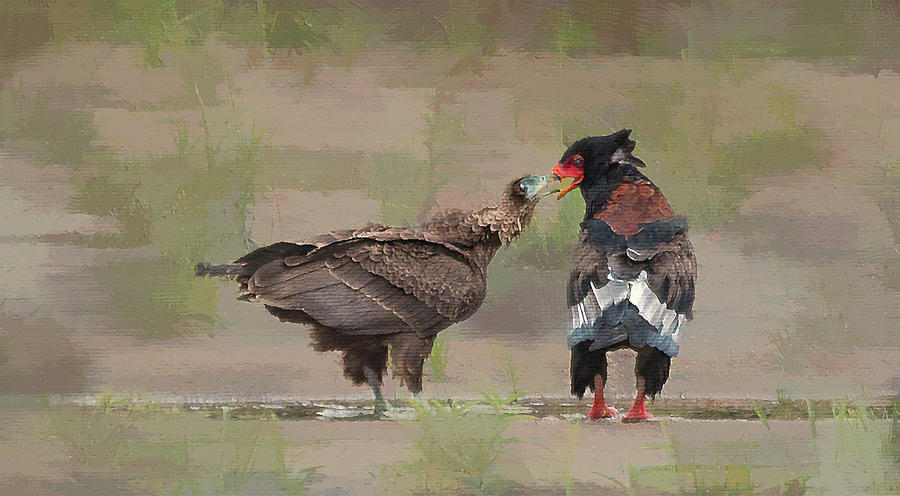 Bird Photograph - Bateleur In Kruger National Park by Ronel Broderick
