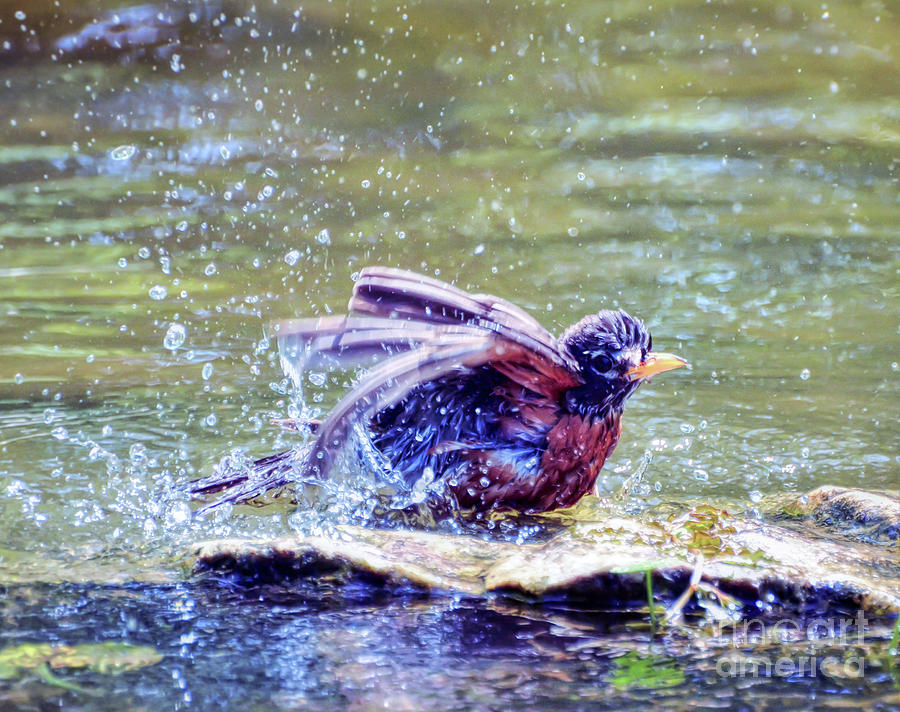 Robin Photograph - Bathing Beauty by Kerri Farley