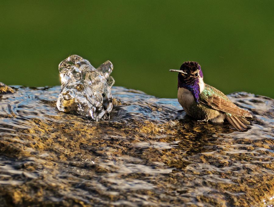 Hummingbird Photograph - Bathtime by Sandra Selle Rodriguez