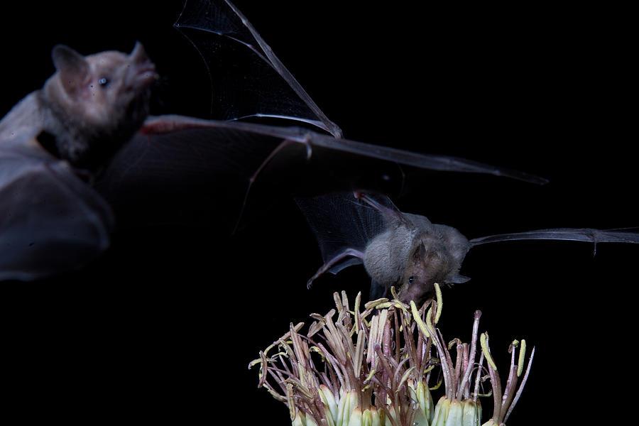 Nature Photograph - Bats At Work by E Mac MacKay