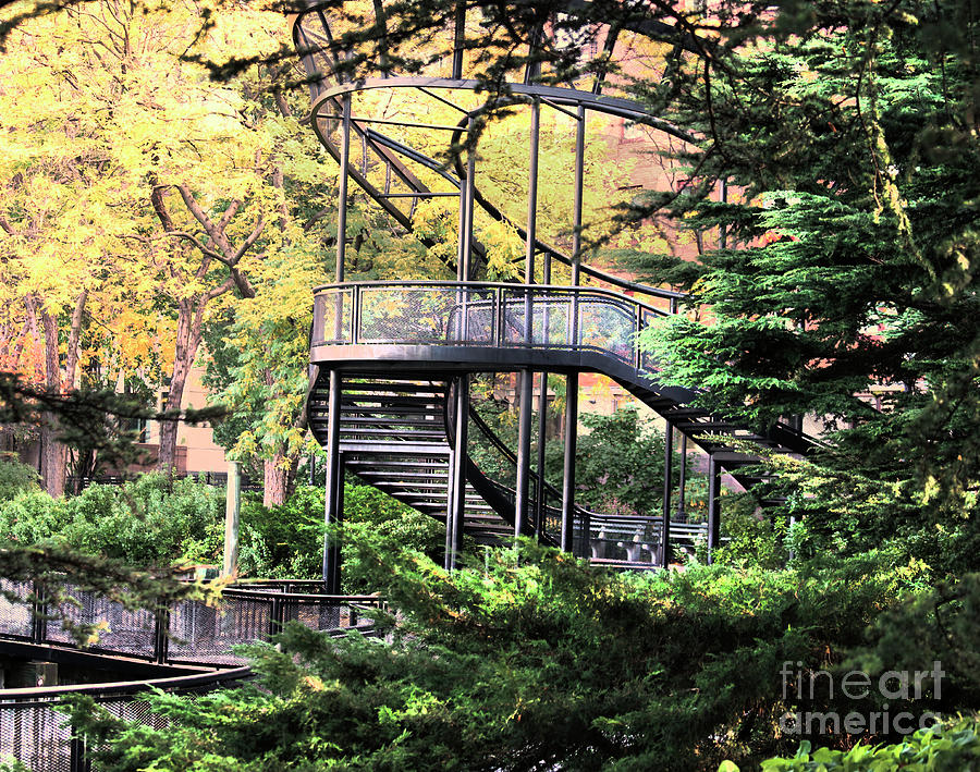 New York Photograph - Battery Park Fall Colors  by Chuck Kuhn